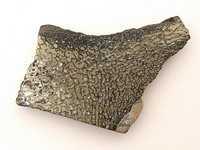 Pyritised Iguanodon Bone